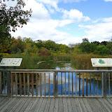 Деревянный настил для обзора флоры и фауны болота и таблички с пояснениями
