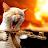 Stephen Chesterton avatar image