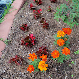 Gardening 2010 - 101_0872.JPG