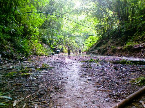 Trekking through Rajkandi Reserve Forest.