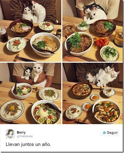 humor twits de gatos (9)