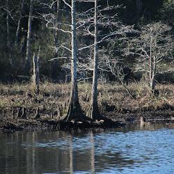 Fowl Marsh from Boat Feb3 2013 075