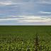 Decreto traz regras e procedimentos para a regularização fundiária de áreas rurais em terras da União e do Incra