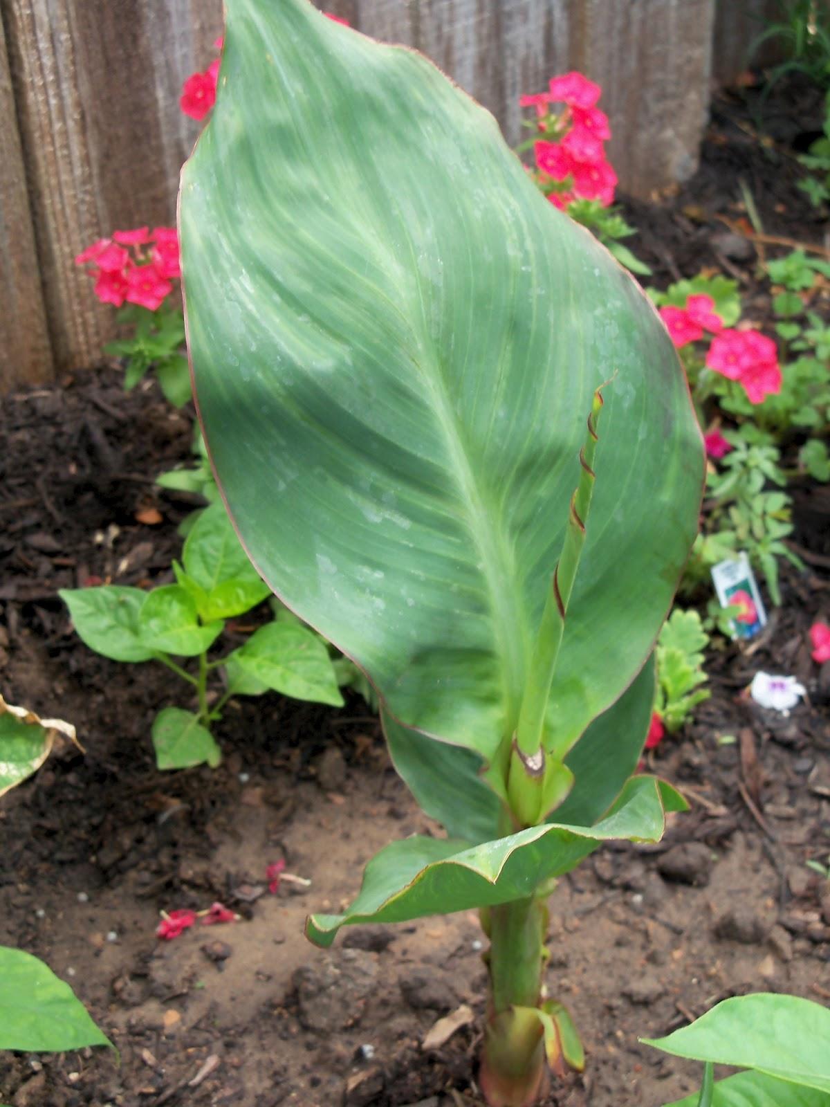 Gardening 2011 - 100_7646.JPG