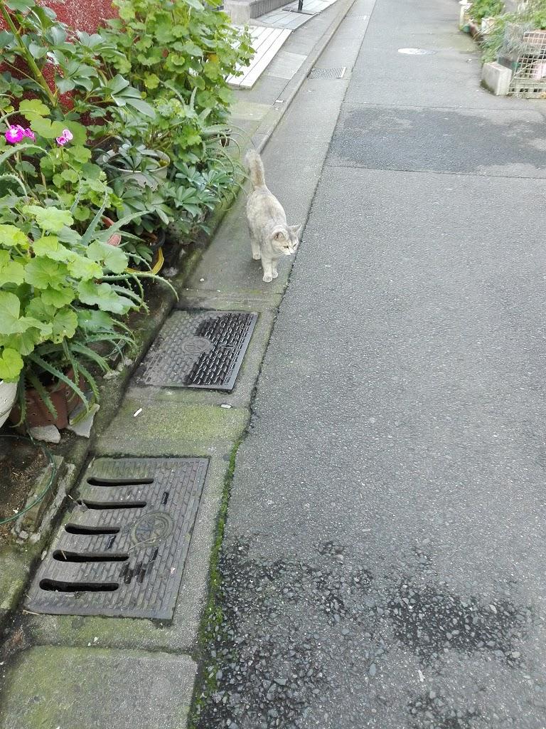 cat-shiro1