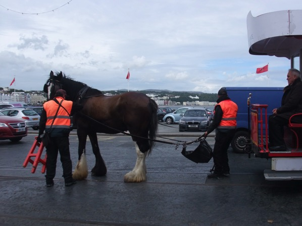 Horse Tram 3