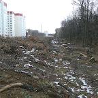 Вырубки ЛЭП в Воронежской Нагорной Дубраве 065.jpg