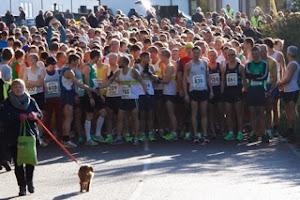 Stebbing 10 miles 10/11/2013