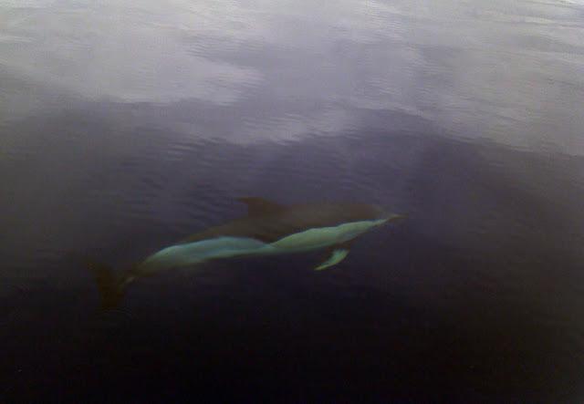 Esses magnificos Cetacios -  Cachalotes - Golfinhos etc 2011-05-19%25252012.05.56