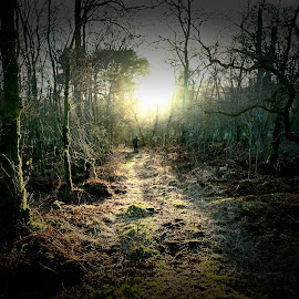 Kirkconnel Flow by James Johnstone - Landscapes Forests ( woodland, light, nature reserve, bog, kirkconnel flow )