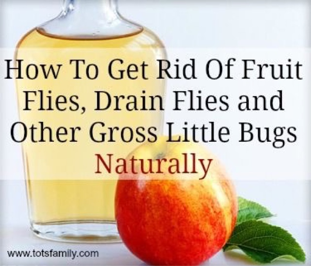 Where Do Fruit Flies Come From In The Bathroom How To Rid