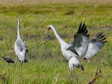 wildlife-birds-3.jpg