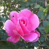 Gardening 2014 - 0404161620.jpg