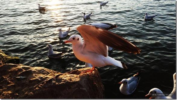 Sampel Foto Kamera Xiaomi Mi 5C 4