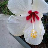Gardening 2010 - 101_1024.JPG