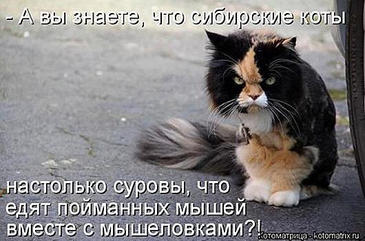1499462192_kotomatrica-22