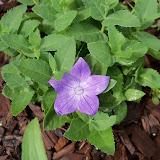Gardening 2010, Part Two - 101_2175.JPG