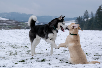 Fabula el perro cazador y el perro de casa