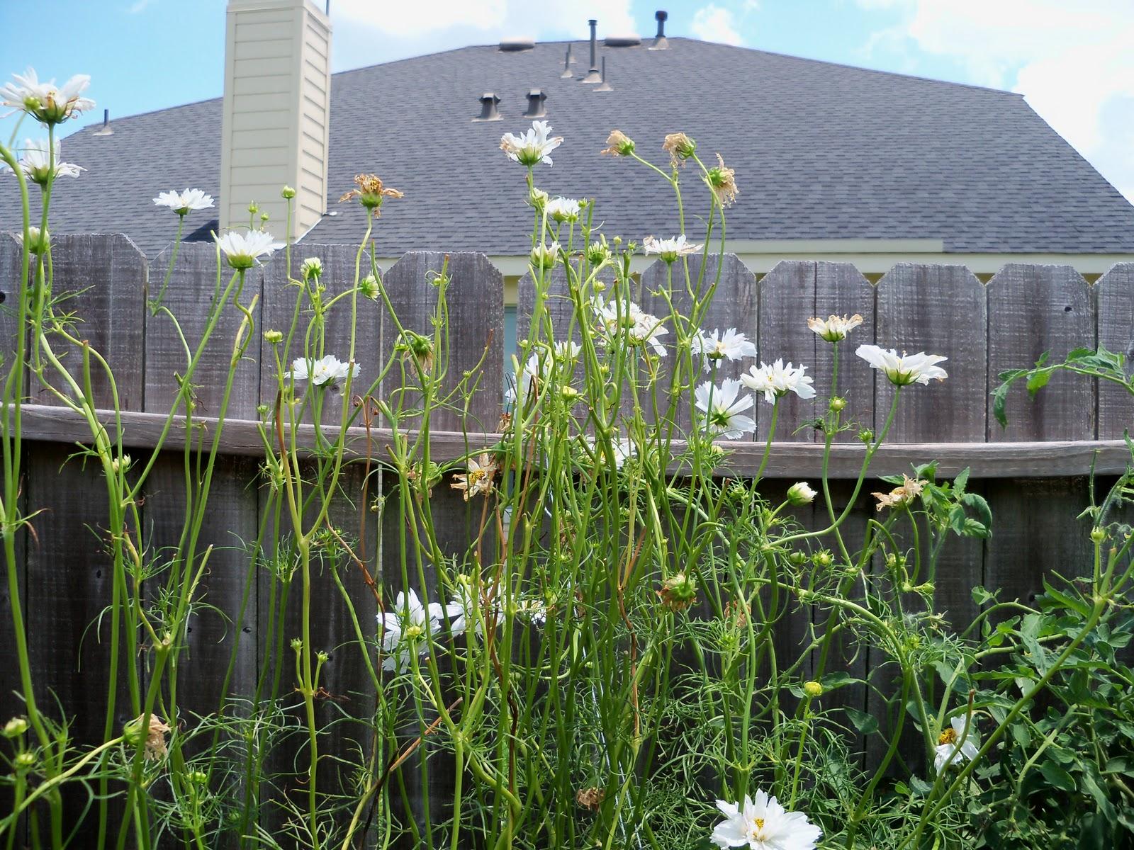 Gardening 2010, Part Three - 101_4887.JPG