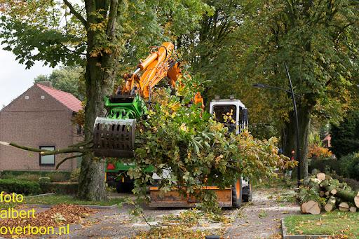 Bomen gekapt Museumlaan in overloon 20-10-2014 (2).jpg