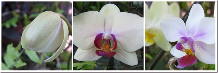 05-17-orchids-collage2