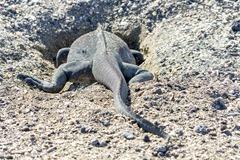 Ecuador-Galapagos-Ferandina-180219-0081-ToWeb
