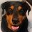 Rose R's profile photo