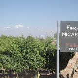 Tenuta di Mallbec, il vitigno di rosso piu' popolare qui