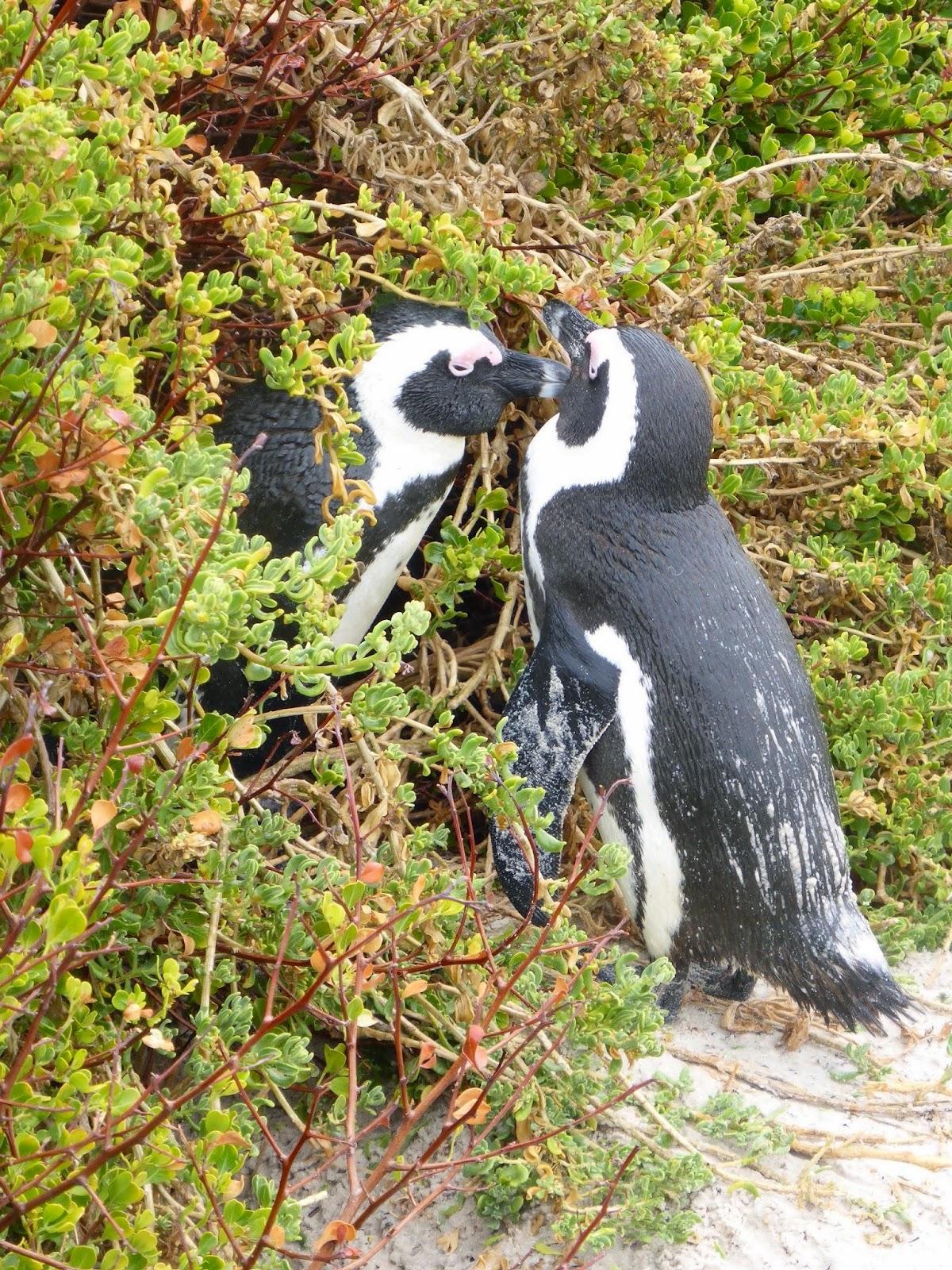 Pinguinpaar.jpg