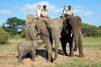 """Der findes """"en håndfuld"""" steder i Sydafrika, hvor det er muligt. Blandt andet her på Camp Jabulani."""