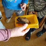 Povídání o netopýrech 9.října 2014 Pod Lipkami