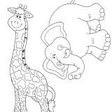 jirafa elefante.jpg