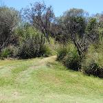 Track between amenities Block and campsite