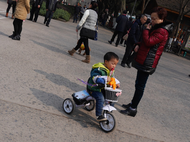 little boy riding a tricycle while eating candied fruit