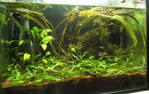 Aquarium bien planté avec peu de poisson