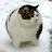 yomy dianseputra avatar image