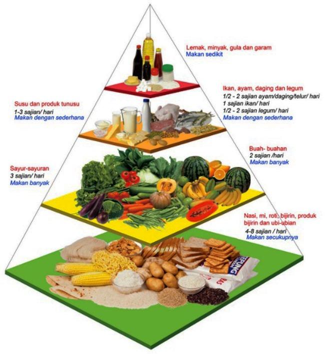 gambar piramid makanan