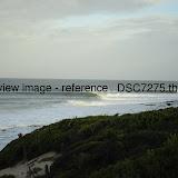 _DSC7275.thumb.jpg