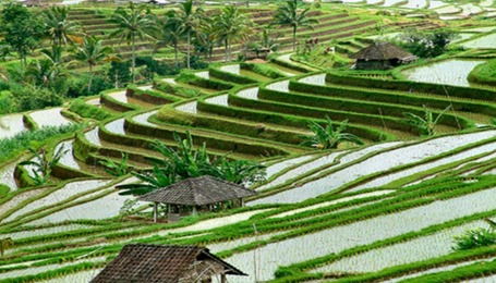 BALI-SUBAK-IRRIGATION-SYSTEM-THAT-IS-RECOGNIZED-BY-UNESCO-4