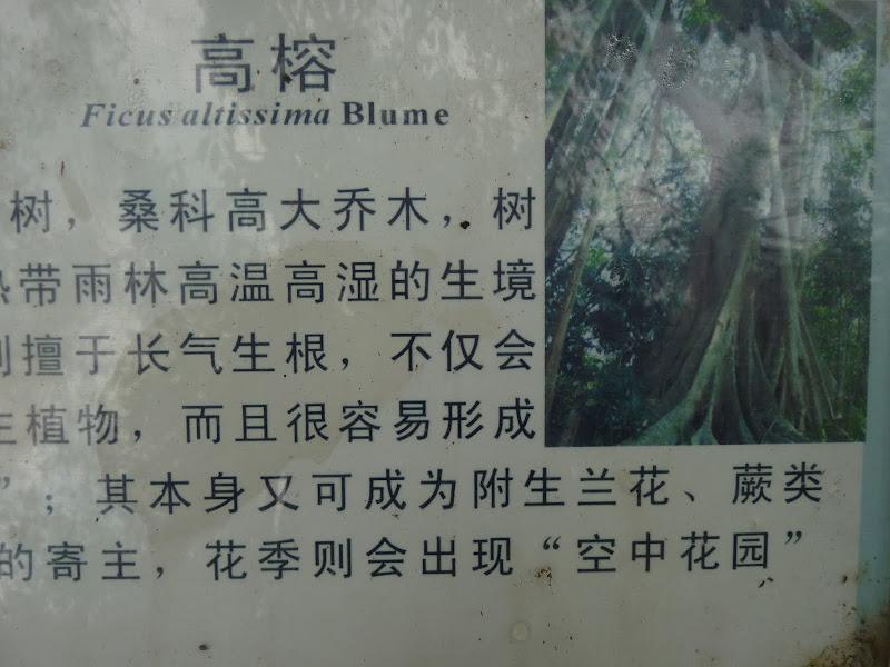 Chine .Yunnan . Lac au sud de Kunming ,Jinghong xishangbanna,+ grand jardin botanique, de Chine +j - Picture1%2B652.jpg