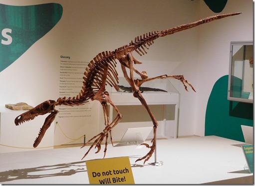 7 velociraptor