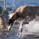 WaterDogs.jpg