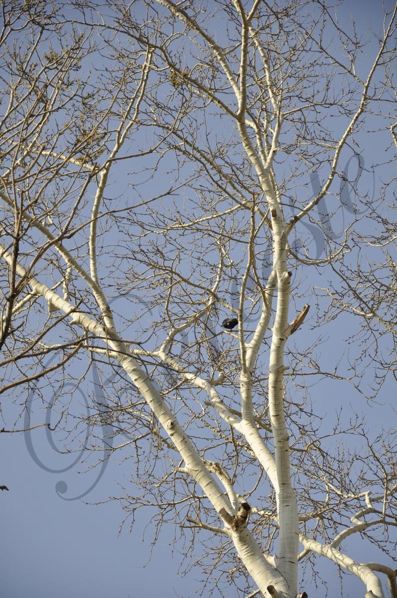 Boncuklardan ağaçlar - yardımcı olacak planlar
