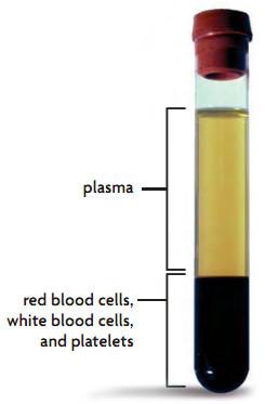 Sistem Transportasi (3) : Darah manusia