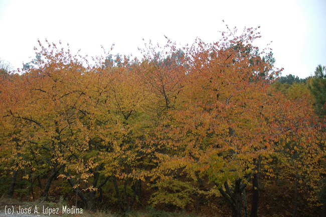 Un otoño más tardío y una primavera más temprana