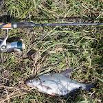 20140612_Fishing_BasivKut_020.jpg