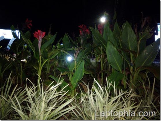 Foto Malam Hari dengan LED Flash