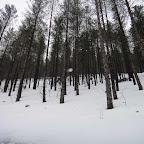 Bois de hètres clairsemé en pente moyenne: un joli terrain de jeu avec de meilleures conditions