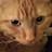 Lara Thames avatar image