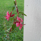 Gardening 2010, Part Two - 101_2422.JPG